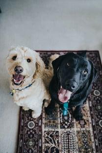 animal health and food dogs