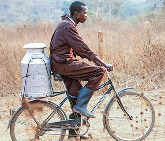 Farmer transporting milk by bike