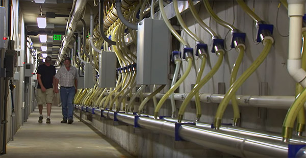 The Mueller Promise-Dairy Farm