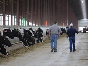 Dairy Case Study